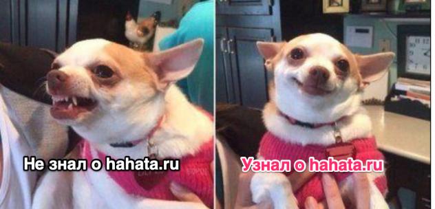 Когда узнал о hahata.ru :)