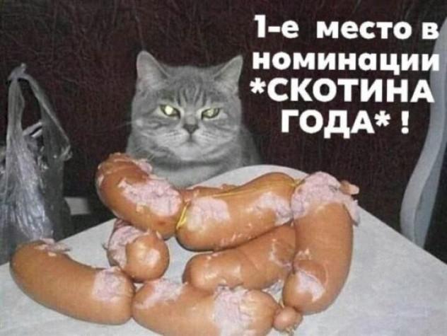 С-кот-ина года!