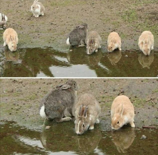 Среди животных тоже попадаются п%д@р@сы...